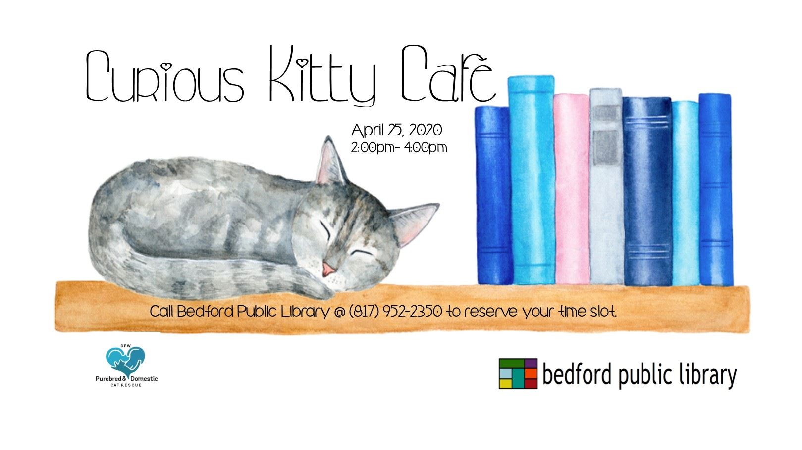 daily_Curious Kitty Cafe