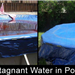 Stagnant Water in Pool Before and After
